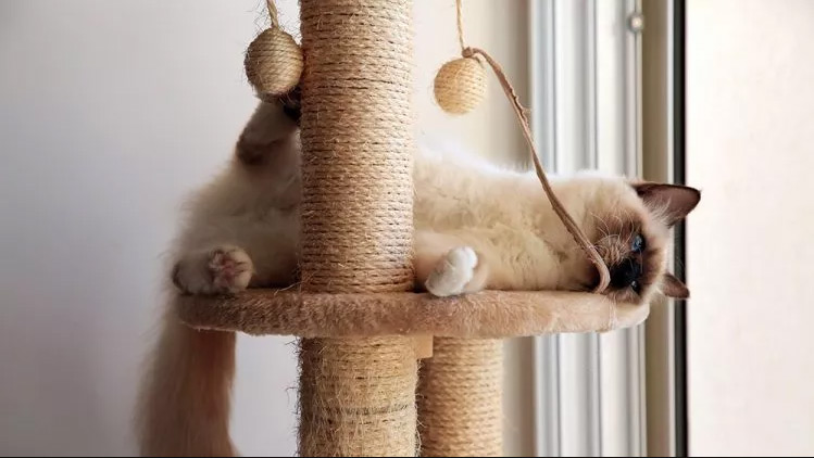 meilleur arbre pour gros chat